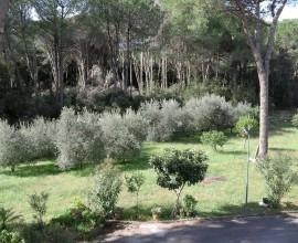 RIF: A72 Splendida villa  a Priverno nelle vicinanze del Castello di San Martino